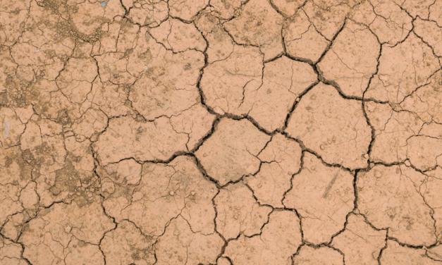Organizaciones internacionales de la industria editorial establecen un compromiso contra el cambio climático